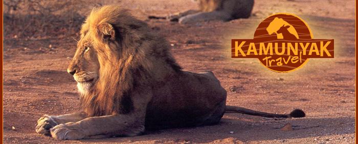 kamunyak travel zuid afrika op maatSafari Op Maat.htm #2