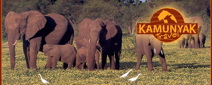 kamunyak travel zuid afrika op maatZuid Afrika Safari.htm #13